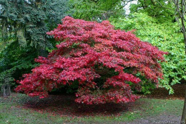 Ornamental Trees Precision Landscape Management