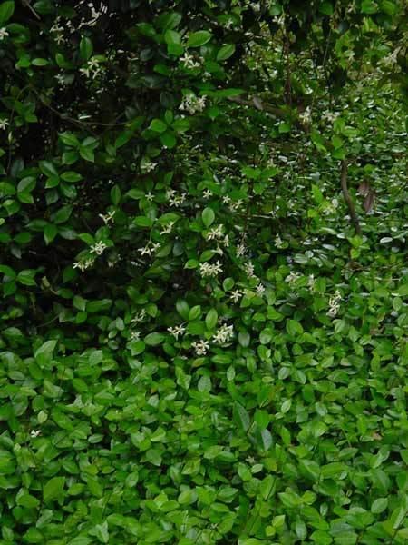 Vines Precision Landscape Management Landscaping